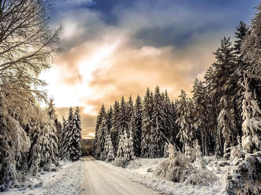 Best Winter Shrubs North Texas