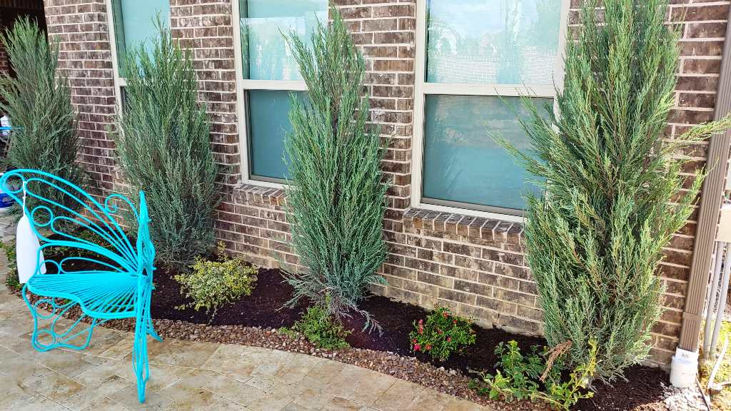 Best North Texas Privacy Shrubs