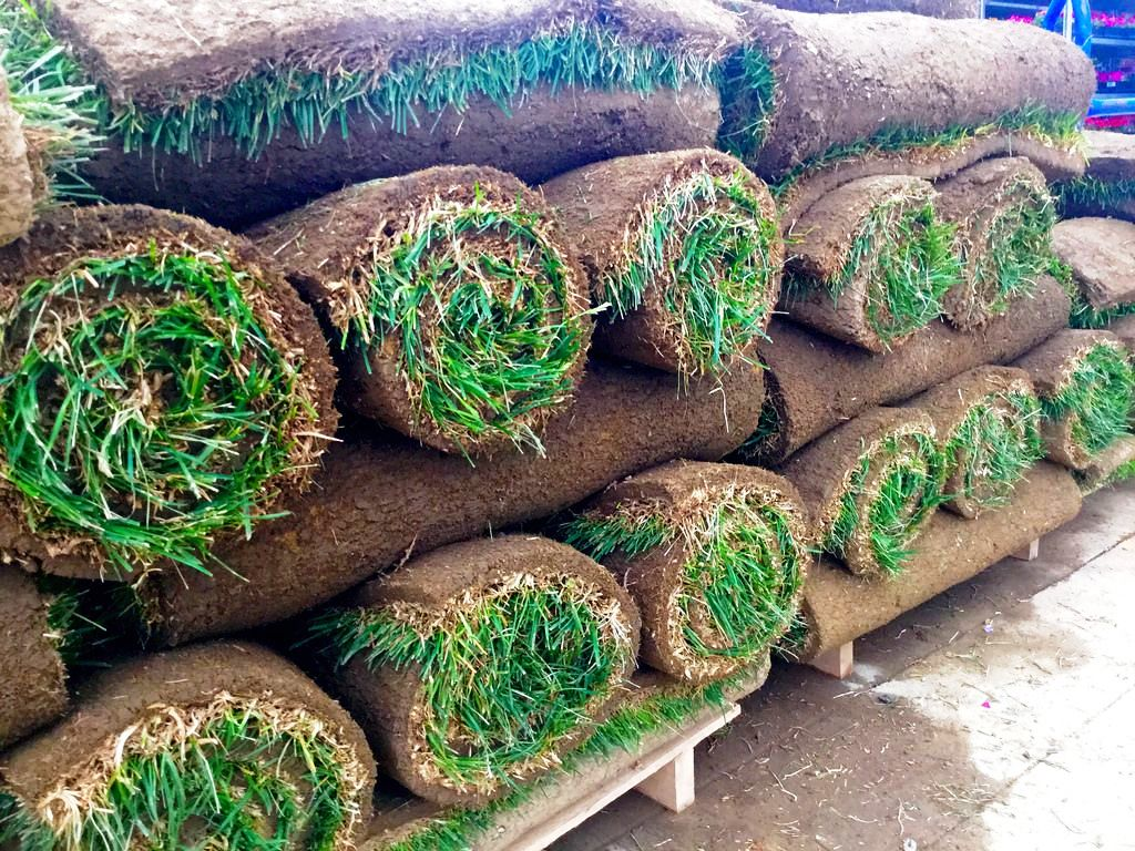 Best Sod Grass Types North Dallas