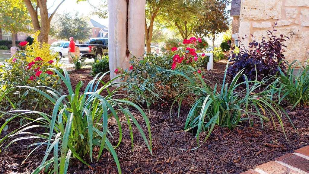 North Dallas Shade Tolerant Perennial Plants